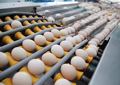 合肥依玛E625在鸡蛋行业的应用