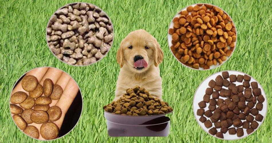 依玛 | 喷码机在宠物饲料行业的应用